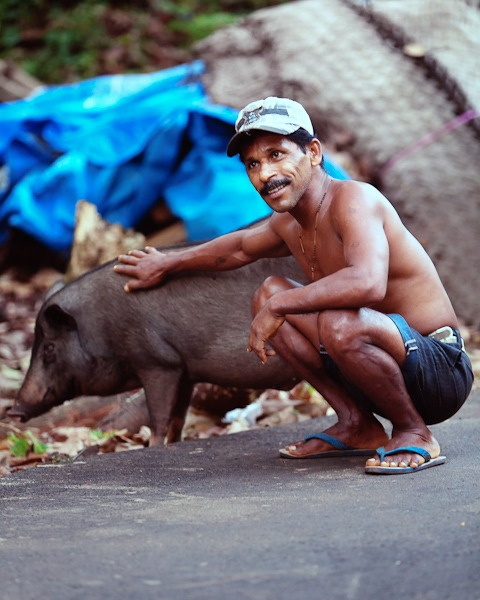 Man who keeps pigs Terekhol Goa india