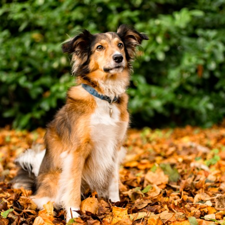 Rescue dog that features in the Manchester dogs home calendar